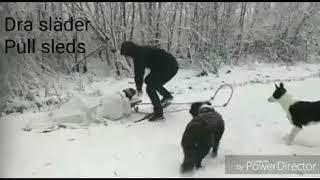 Hundkonsulterna  - Finland 100 år