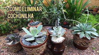 6 Suculentas De Sol Com Identificação Mais Replantes