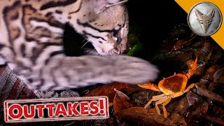 ocelot-vs-crab