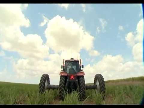 SUGAR CANE CROP AGRICULTURAL CULTIVATING INDUSTRY SUGAR CANE AUSTRALIA VISUALS