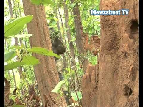 Landmine blast in Gadchiroli, seven policemen killed