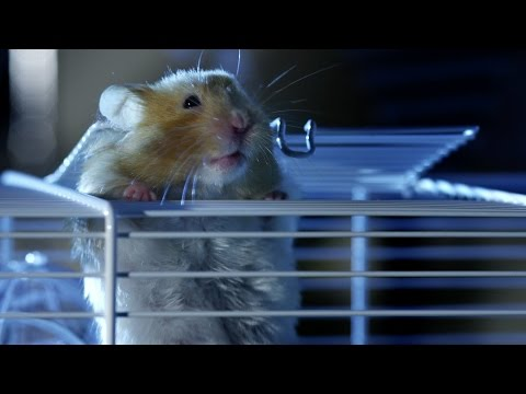 Hamster's great escape | Pets - Wild at Heart: Episode 2 preview | BBC One