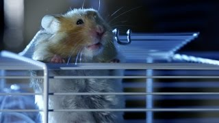 Hamster's_great_escape_|_Pets_-_Wild_at_Heart:_Episode_2_preview_|_BBC_One