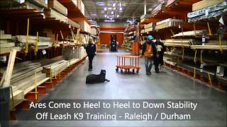"7mo Old Cane Corso ""ares"" - Dog Training In Raleigh Durham"