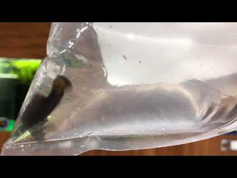 Dee's Pets Fish Unboxing ep. 1