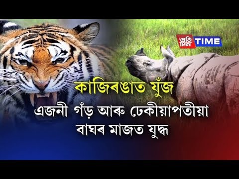 Different stories of animals getting into violent scuffles at Kaziranga National Park