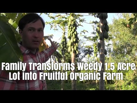 Family Transforms Weedy 1.5 Acre Lot into Fruitful Organic F