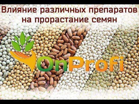 Замачивание и проращивание семян в различных препаратах. Сравнение.