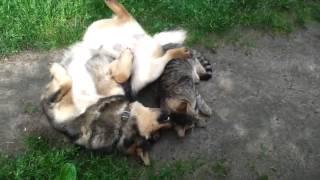 Собака уговаривает на секс  Dog wants the cat