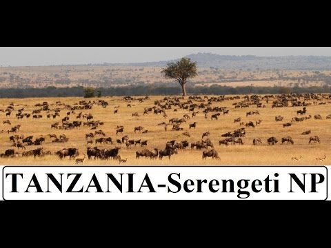 Tanzania - Serengeti National Park Part 7