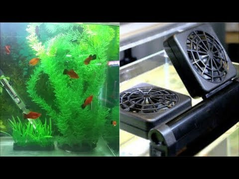 How To Cool Down Aquarium Water Prevent Fish Tank Water From Overheating Youtube