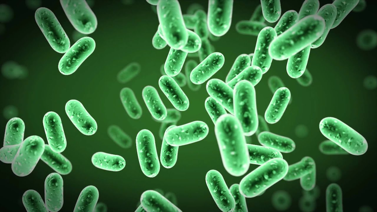 Bacteria Animation - YouTube