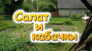 Салат и кабачки