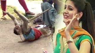 Sapna Chaudhary Bhi Fan Ho Gai Is Bandariya Ka Dance Dekh Ke - Comedy Funny Video From My Phone