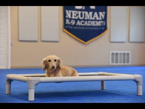 Dagmar (Miniature Dachshund) Boot Camp Dog Training Video Demonstration