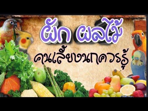 ep44 ทำไงให้นกกินผักผลไม้ ผักผลไม้อาหารนก นกหงส์หยก ซันคอนัวร์ กรีนชีค เลิฟเบริ์ด