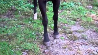 Pee Wee  Horse Farm Easton, CT 10/11