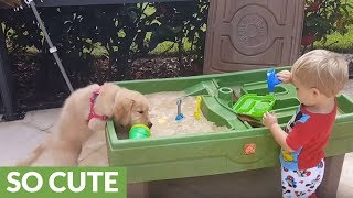 Toddler and puppy preciously play side-by-side