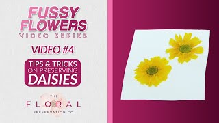 How To Preserve Daisies Beautifully and EASILY | DIY Flower Crafts