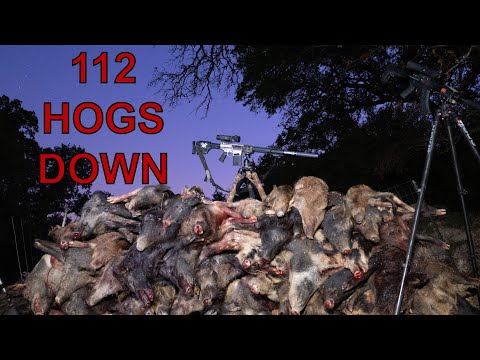 112 HOGS DOWN | Thermal Hog Hunting with the New Pulsar XP50 TRAIL 2