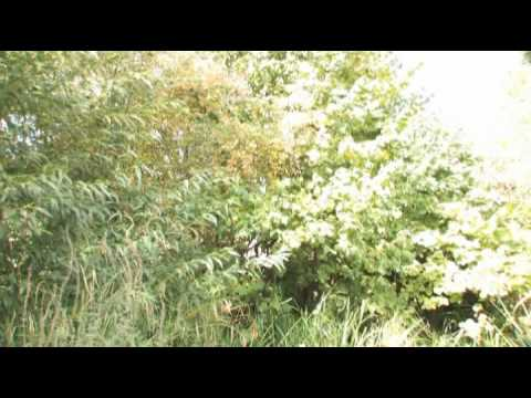 Wildlife garden importance of wildlife gardening youtube for Wish garden deep lung