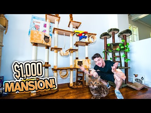 Download Youtube: BUILDING MY KITTY HIS DREAM HOUSE!! (INSANE)