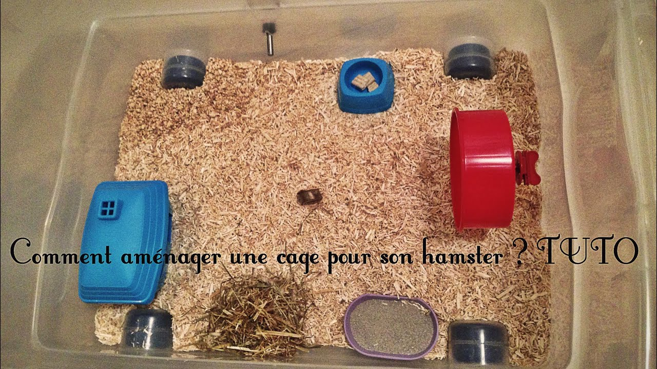 Comment amnager une cage pour son hamster russe  TUTO   YouTube