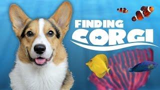 corgi finds final fish tank friend   aquarium complete life after college ep 488