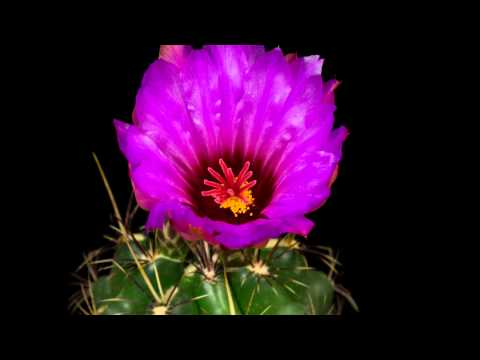 Mesmerizing time lapse featuring blooming flowers