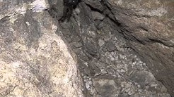 Camel Spider in Arizona