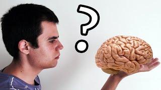 qu pasara si usramos el 100 de nuestro cerebro