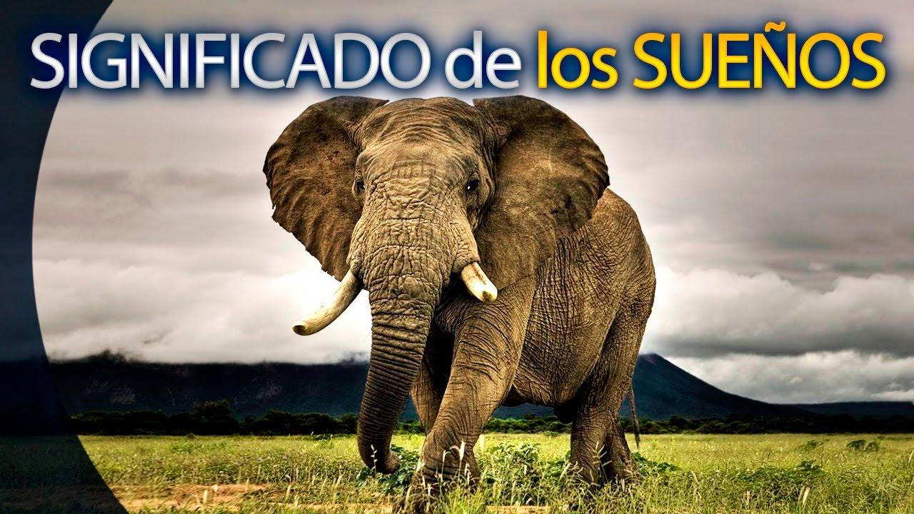 Soñar Con Elefante Significado De Los Sueños Youtube