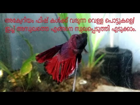 How To Cure Itch/ White Spot Disease In Aquarium Fish.