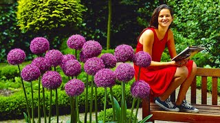 How To Plant Allium Globemaster: Jeff Turner Plants Giant Allium Bulbs In The Border