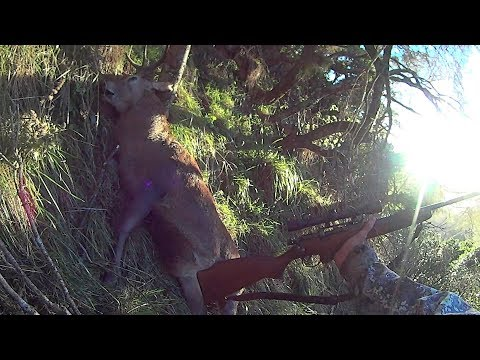 Hunting Red Stags on a Budget in New Zealand
