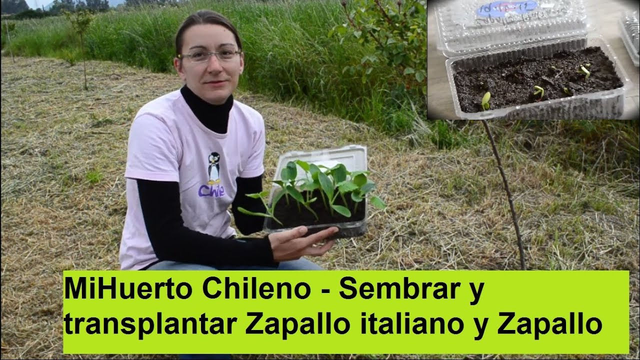 zapallo chileno - photo #6