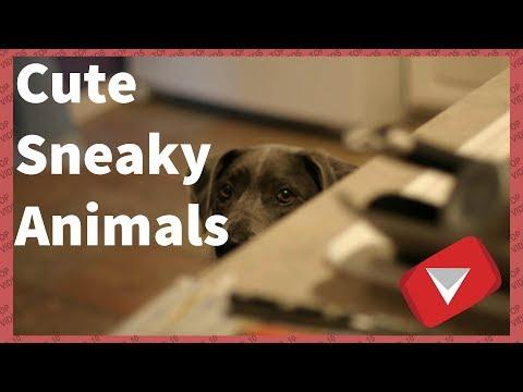 Sneaky Dog Video | Sneaky Cat Video [Cute] (TOP 10 VIDEOS)