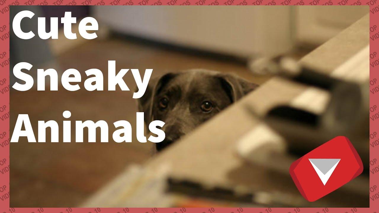 Sneaky Dog Video   Sneaky Cat Video [Cute] (TOP 10 VIDEOS)