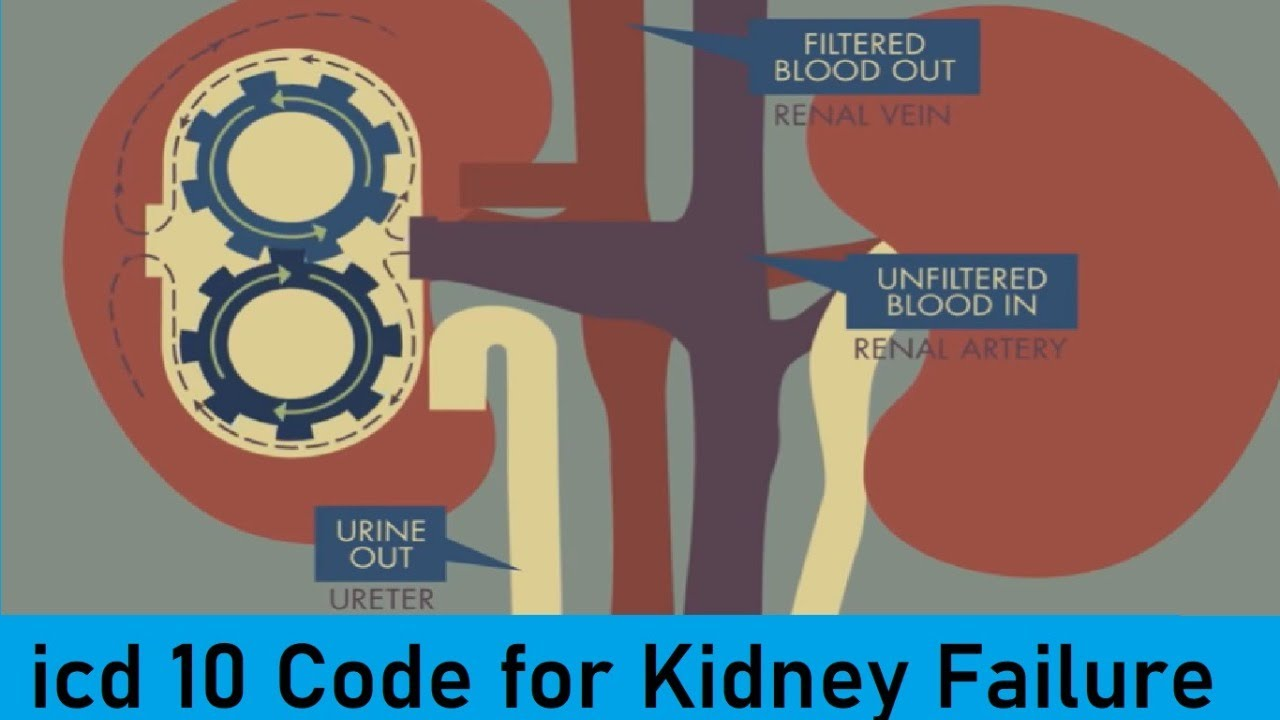 Icd 10 Code For Kidney Failure Youtube