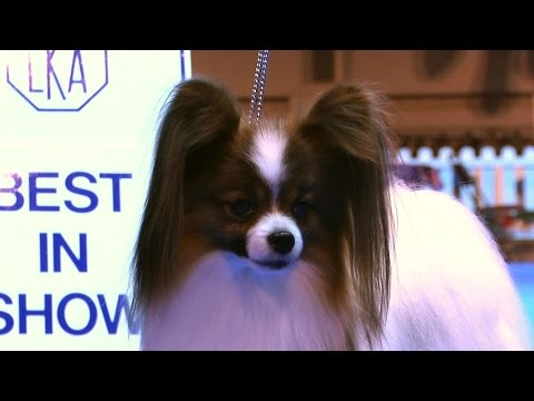 Ladies Kennel Association 2016 - Best in Show