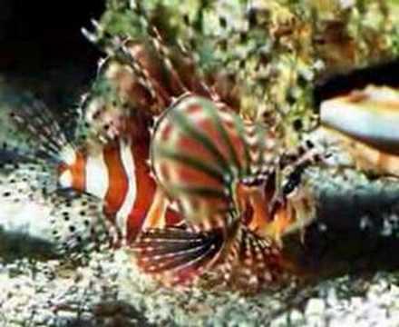 Meraviglie spettacolari dei fondali marini isole e coste for Sfondi pesci tropicali