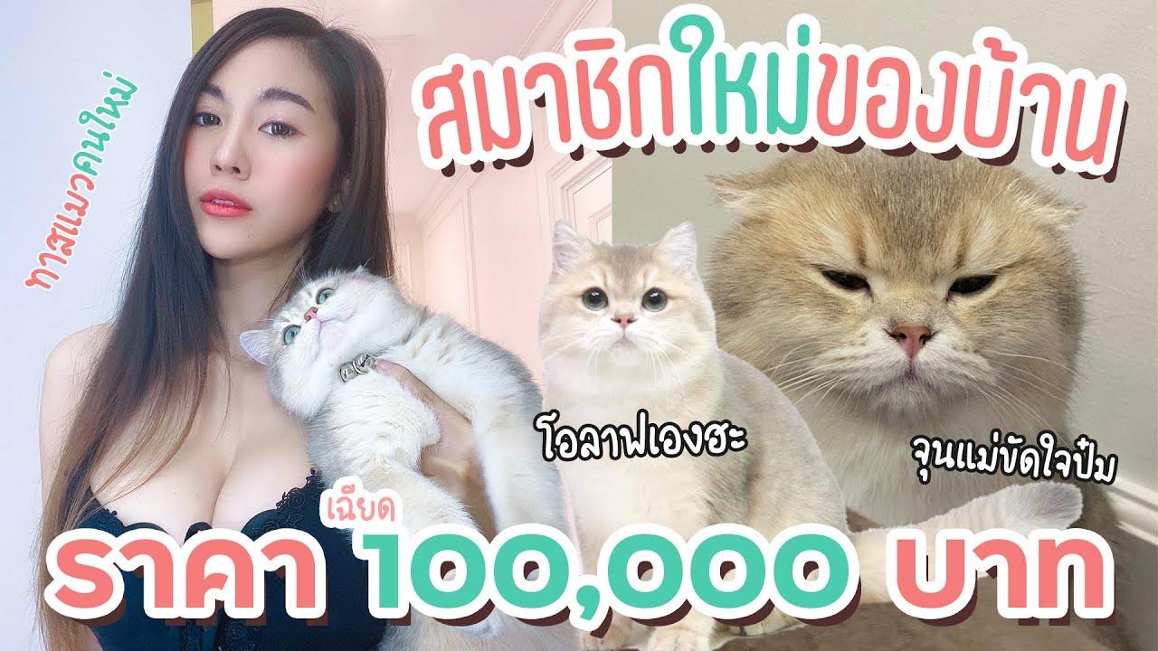 PANGCHOM VLOG |  ซื้อแมวตัวแรก 100,000 บาท กลายเป็นทาสแมวเต็มตัว