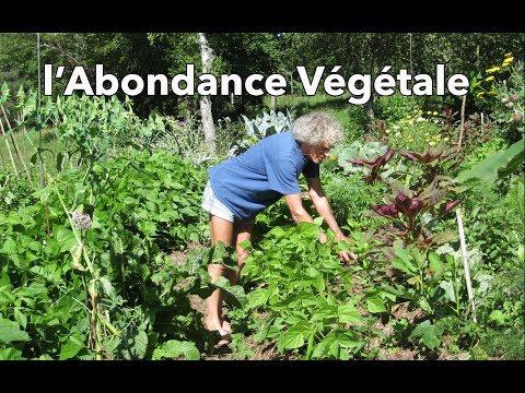 l'Abondance Végétale (selon Philip Forrer) - culture sur buttes