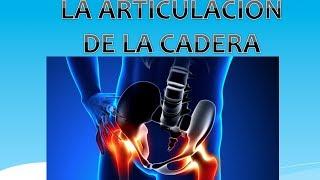 Derecha cadera articulación de