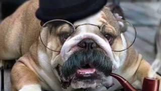 Смешные собаки 2016! Смешные собаки картинки. Смешные собаки видео смотреть!