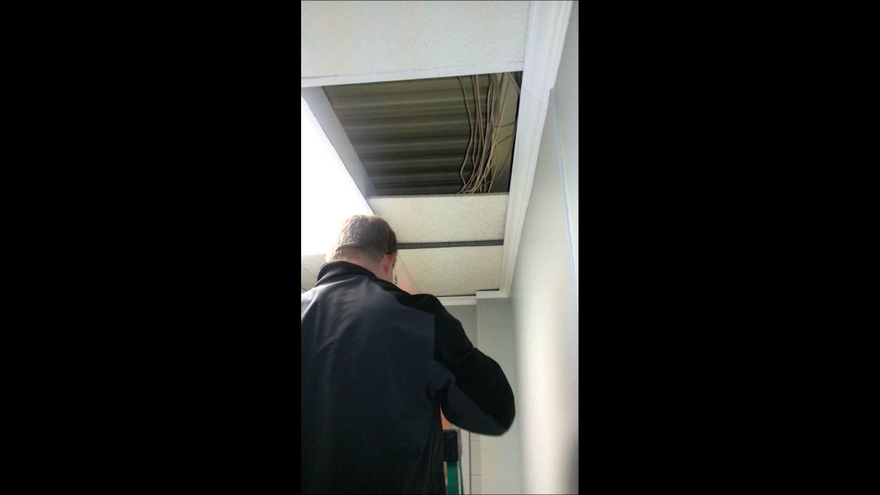 Bat Removal From Drop Ceiling