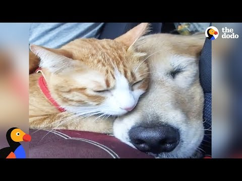 Feral Kitten Bonds With New Dog Mom | The Dodo Odd Couples