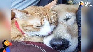 Feral Kitten Bonds With New Dog Mom | The Dodo Odd Couples thumbnail