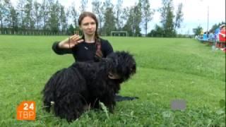 Порода собак Пули