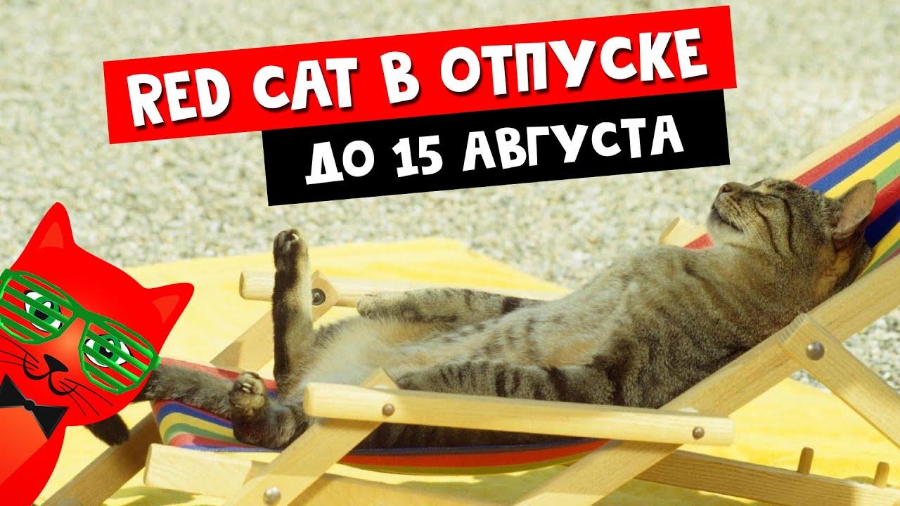 Рэд ушел в отпуск до 15 августа | Канал Red Cat | Видео будут на канале RedCat Life